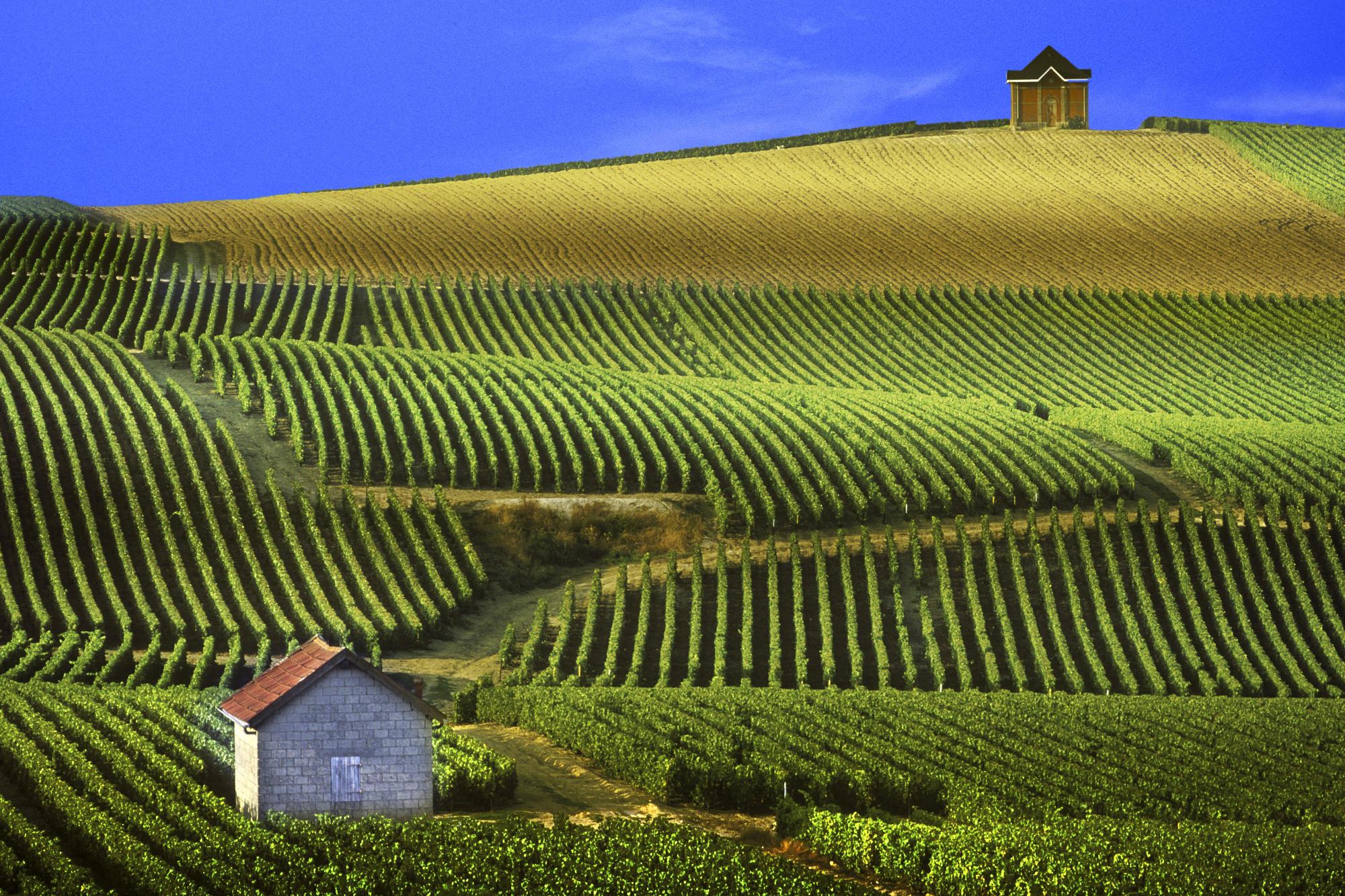 Resultado de imagem para Bordeaux ou Borgonha?